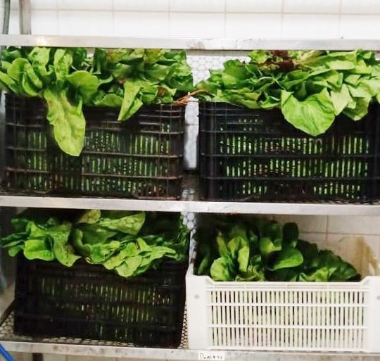 Produtor rural doa verduras para Santa Casa semanalmente