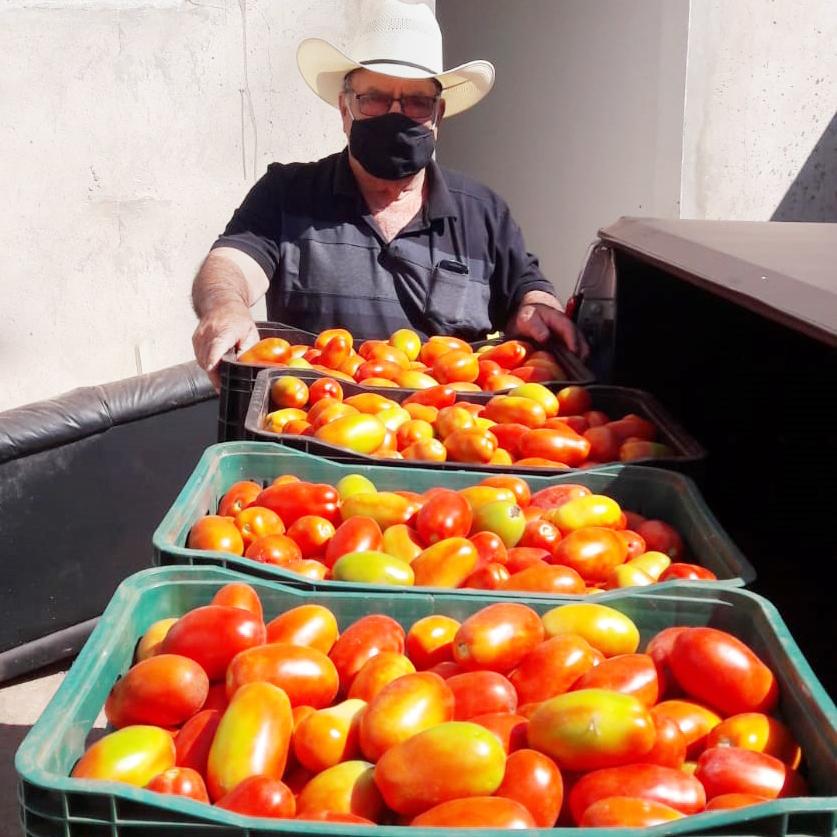 Produtores de Parisi fazem doações de tomates